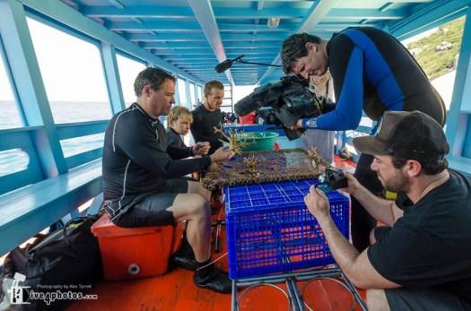 Crystal Divers coral nursery setup