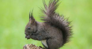 San Gregorio Matese – Un'oasi nel Parco del Matese: per conoscere lo scoiattolo meridionale
