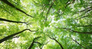 """MIGNANO MONTE LUNGO – Circolo culturale """"Porta Fratte"""", svolto l'incontro con lo scopo di sensibilizzare i più giovani sull'importanza vitale degli alberi"""