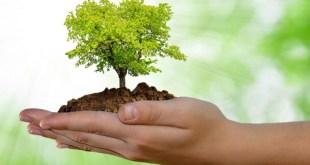 Teano / Cellole – Giornata nazionale degli alberi: giovani piante pronte ad essere piantumate dall'IPSSART