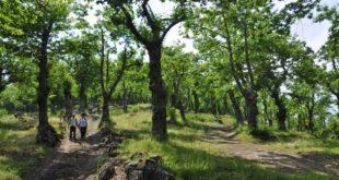 ROCCAMONFINA  –  Castagna, la sagra è passata: il dramma dei coltivatori resta