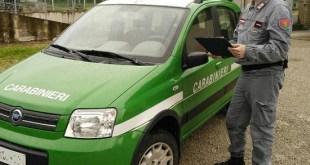Tora e Piccilli – Bracconieri nel Parco Regionale, fermati con un cinghiale morto in auto: due persone denunciate