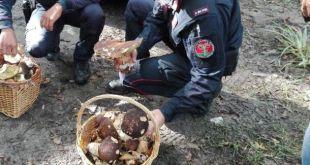 """Roccamonfina – """"Rubano"""" funghi e castagne, multe e sequestri"""