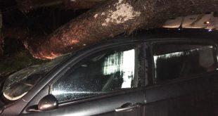 Teano – Tromba d'aria, albero cade e colpisce vettura in transito: donna miracolata