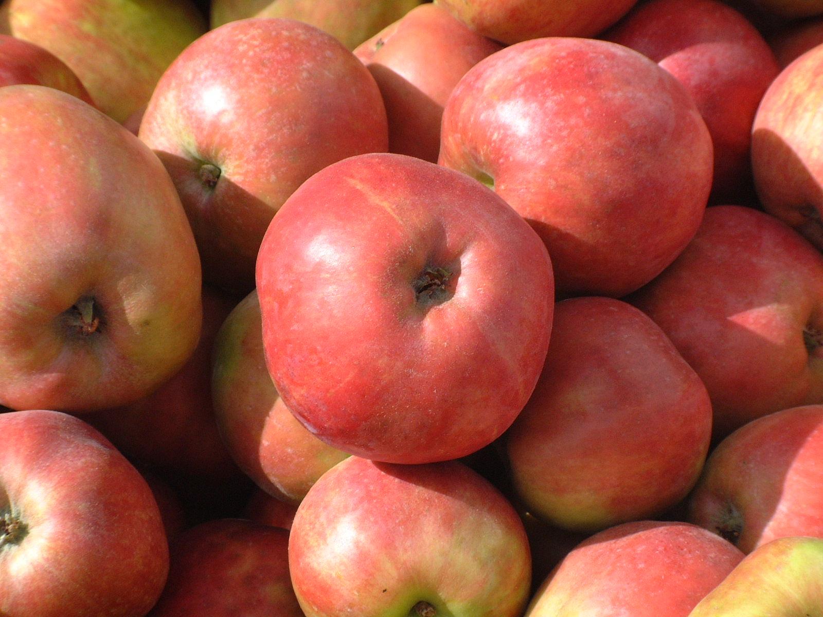 Slut på äpplen