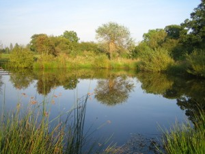 Pond_near_River_Ray_2_-_geograph.org.uk_-_1266771
