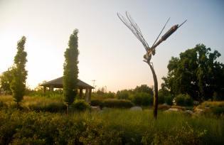 Delano Park Summer 2011 099