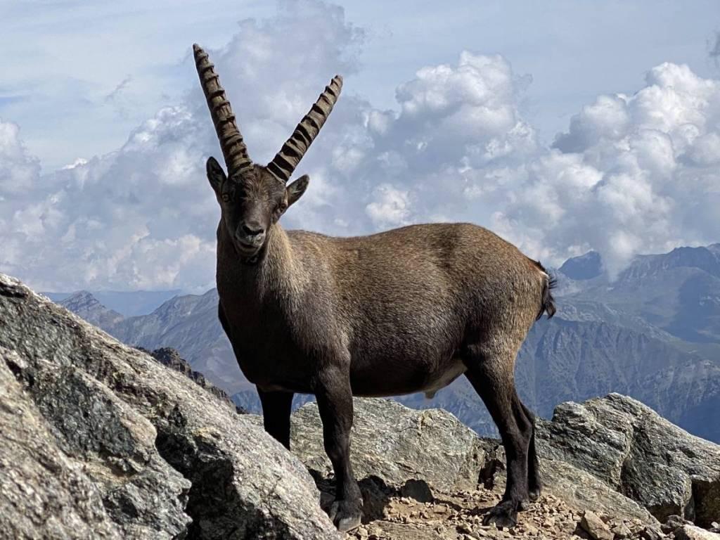 La fpa2 veut favoriser la cohabitation avec la faune sauvage en paca