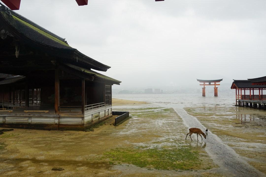 Miyajima Island & Hiroshima Itinerary