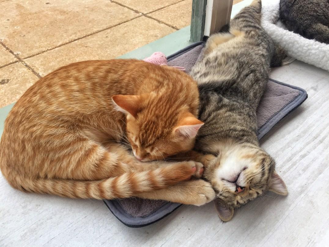 cat declawing cost