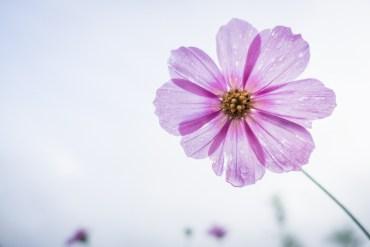 Si fueras una flor