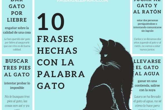 10 Frases Hechas Con La Palabra Gato La Página Del Español