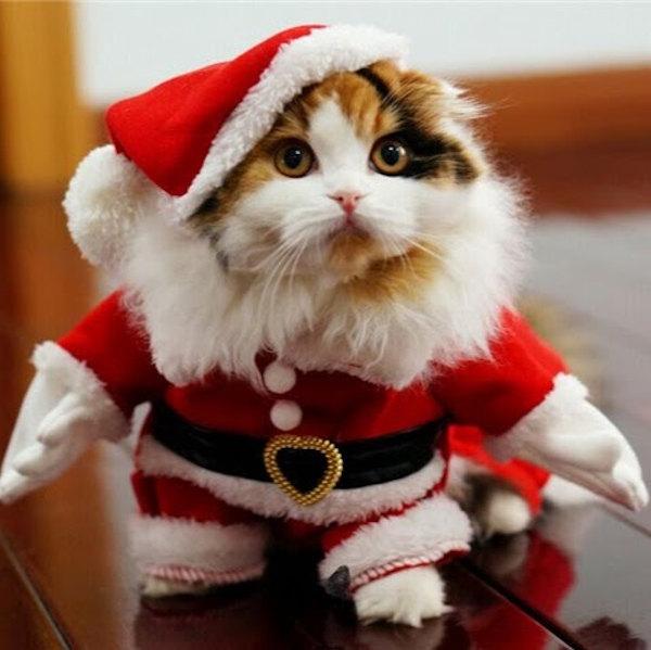 Foto Babbo Natale versione gatto