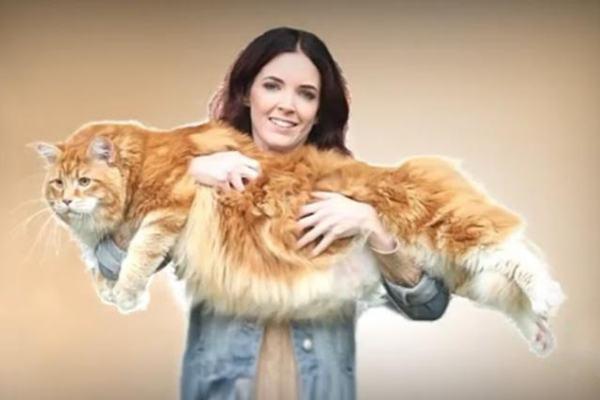 Foto Omar il gatto pi grande del mondo