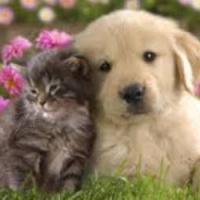 gatti e cani – centro veterinario capri – paginas canarias