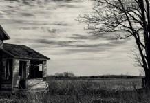 Le ombre di Grean Oak di Fausto Mancini