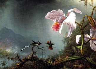 Two Fighting Hummingbirds with Two Orchids. Martin Johnson Heade