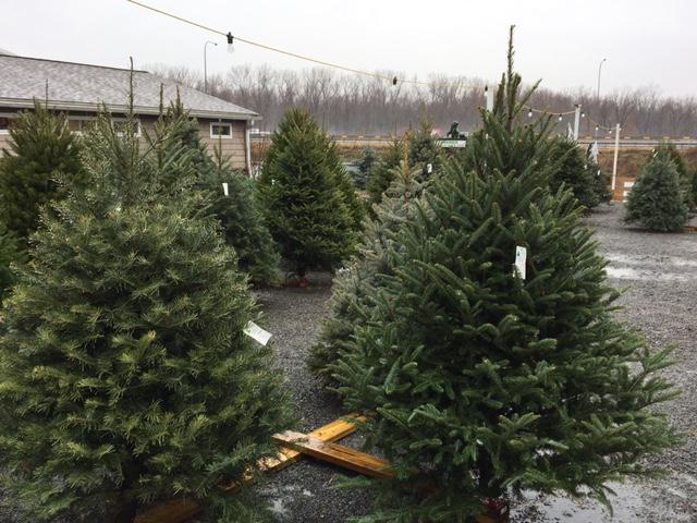 Christmas Tree Syndrome_1480545664723.JPG
