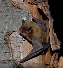 Mr Bat_1561179474366.jpg.jpg