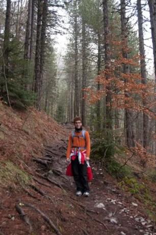 Cortina abbinato ai colori della foresta