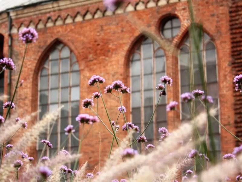 Fiori, funghi, api. 22 giorni nelle Repubbliche Baltiche