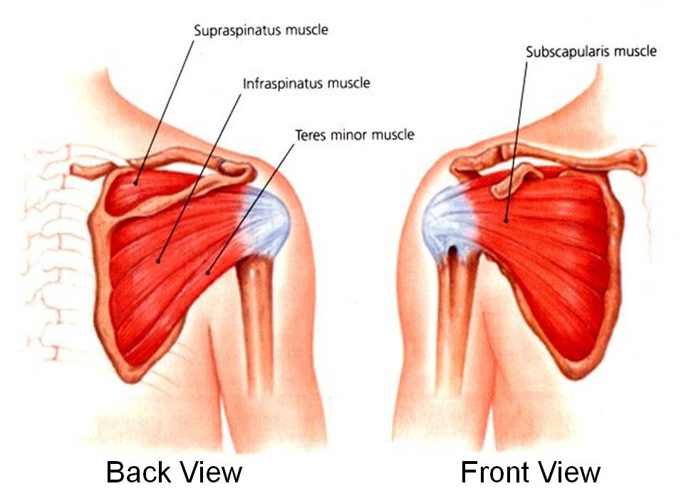 Rotator Cuff Tear Jonathan Aarons Md Pain Management