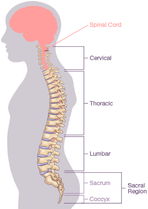 nerves in neck and shoulder diagram wiring for flasher relay trapped nerve back spine pain management spinal region