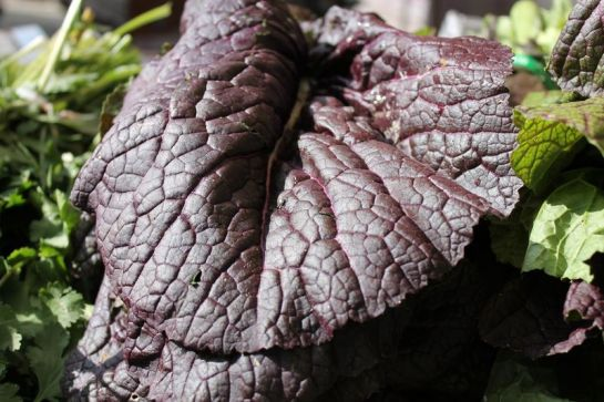 A Big Leaf of Purple Mustard