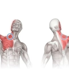 Upper Arm Muscles Diagram 1 Way Switch Wiring Massage Therapy For The Scalene Showing Areas Of Pain Referred From Muscle Group This Shows