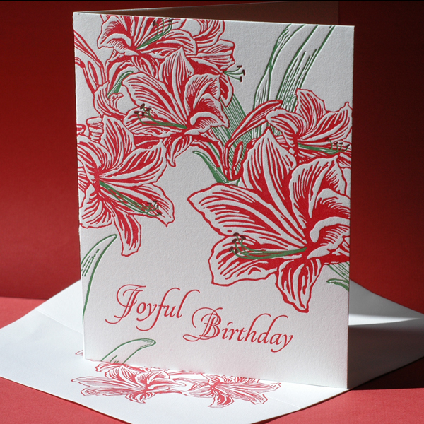 Amaryllis Birthday Card