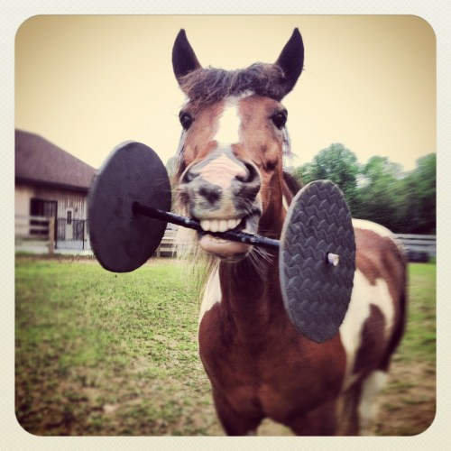 minnow the workout pony