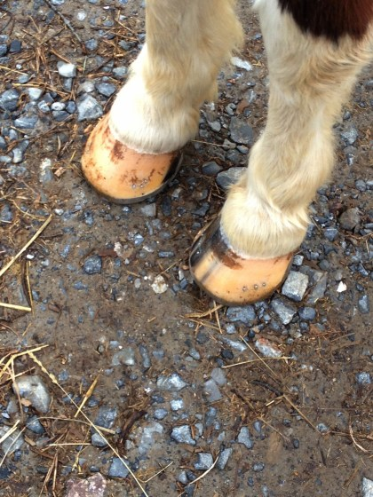 Minnow Gets Ground Control Shoes // Ringbone // Painting Pony