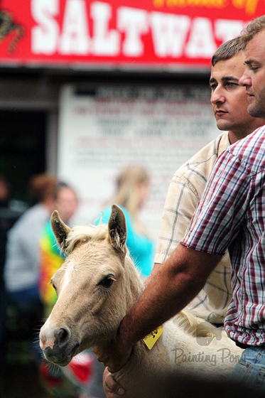 Pony Penning 2013 // Chincoteague Pony Auction // Painting Pony