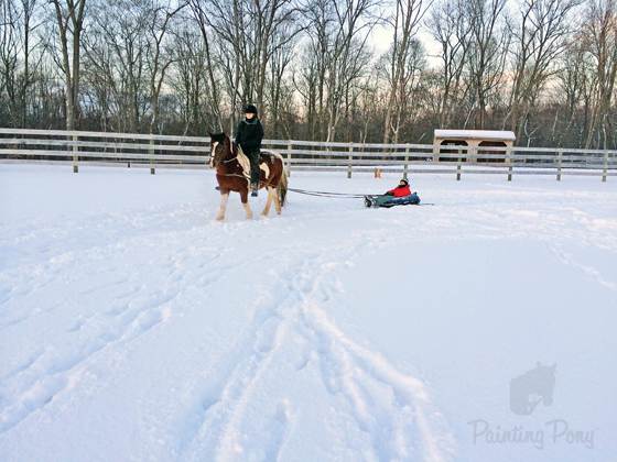 The Chincoteague Ponies go Sledding // Painting Pony