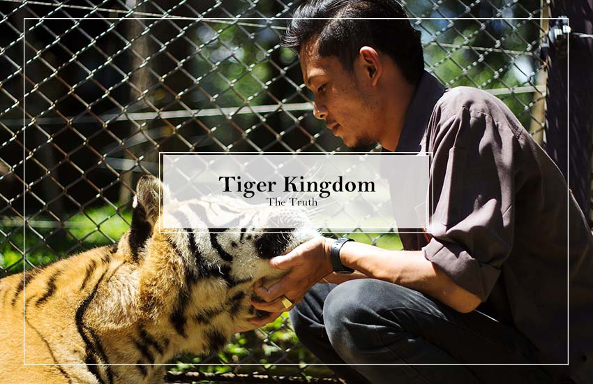 The Truth about Tiger Kingdom