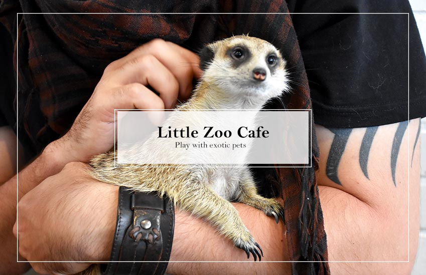 Play with exotic pets at Little Zoo Café