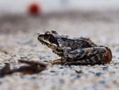 Mała żabka muchy miała w nosie.