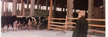 Valmib uus külmlaut lehmadele