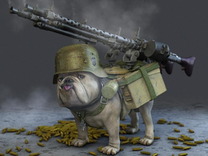 Animal Pak Quotes Wallpaper Funny Picture Funny Dog With Gun Pak101 Com