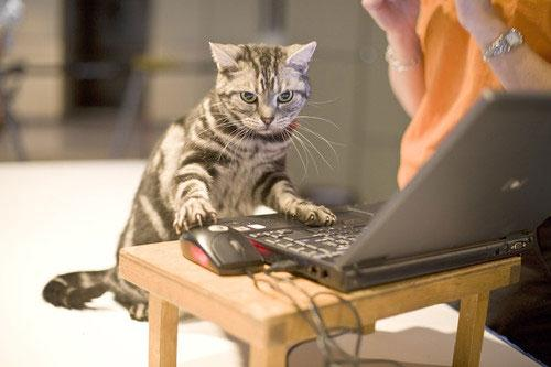 Image result for laptop with cats
