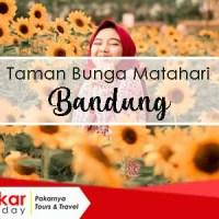 Alamat dan Harga Tiket Wisata Bunga Matahari Bandung