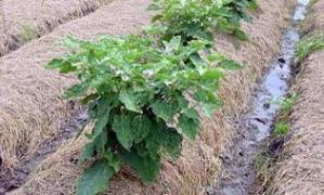 Organic farming - composting & its mechanism