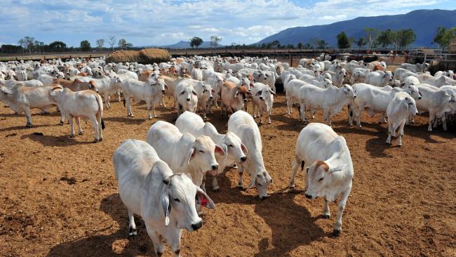 Animal census to promote livestock sector » Pakissan com