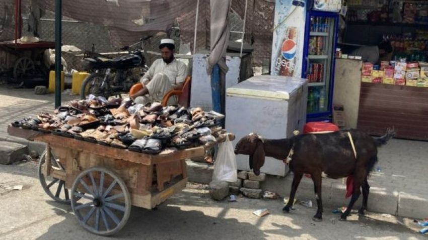 Shoes for sale on a cart with a curious goat standing next to it