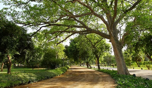 The union minister of environment, forest and climate change recently announced plans to build 200 urban forests in india. Lahore Gets Urban Forests On Japanese Model To Fight Air Pollution Pakistan Today