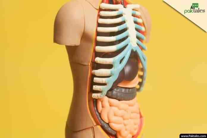 fatty liver, bile duct, nausea and vomiting,upper quadrant,