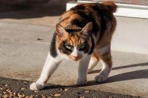 警戒する猫ちゃん