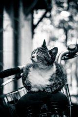 幸せそうな表情の猫ちゃん