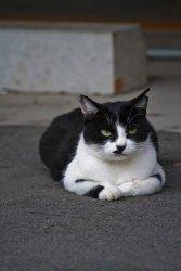ふてぶてしい表情で睨みつける猫