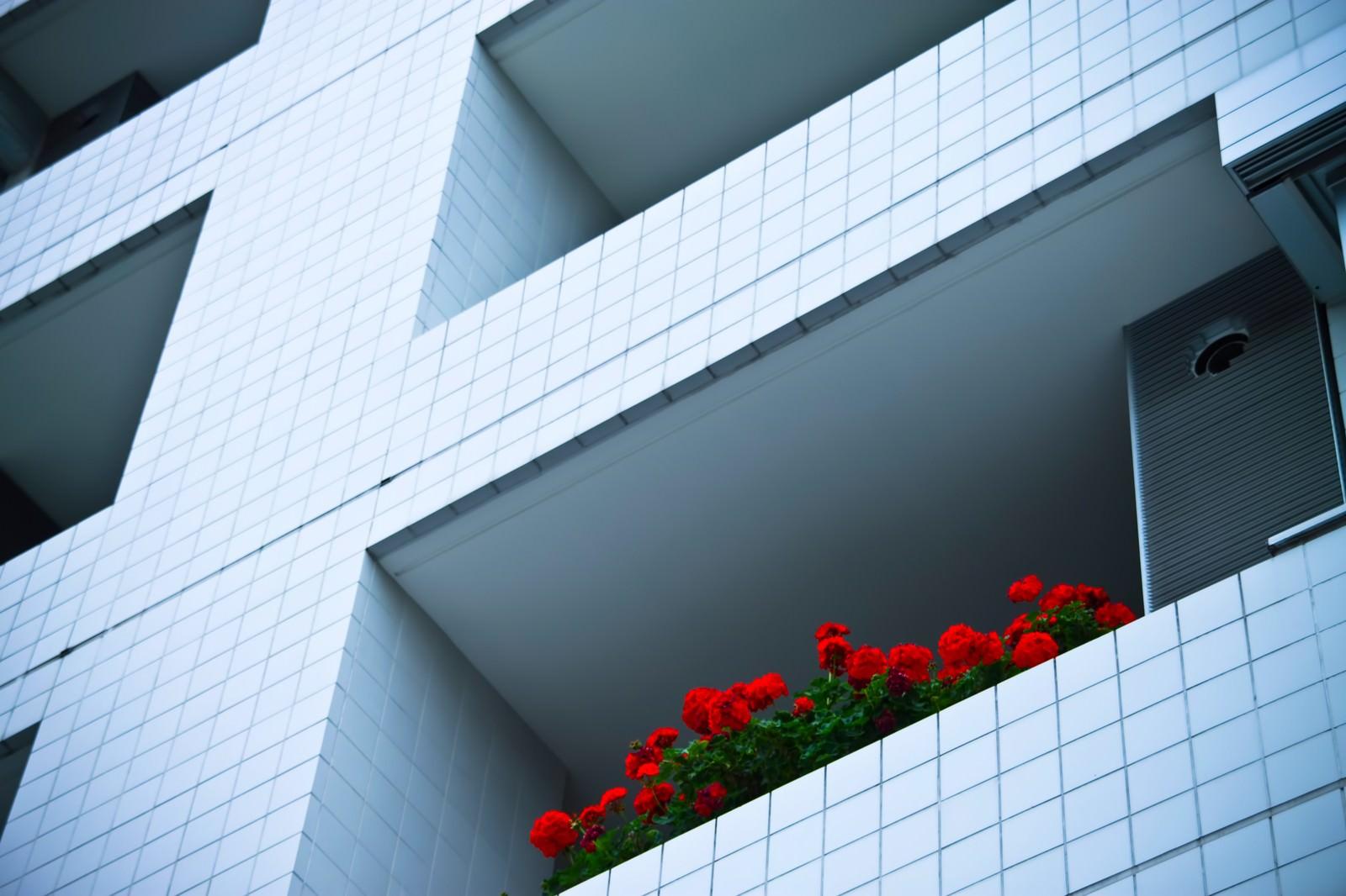 「マンションと赤い花」の写真